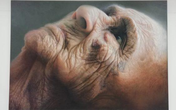 Memoria y territorio en la pintura de Carlos Calderón Torres